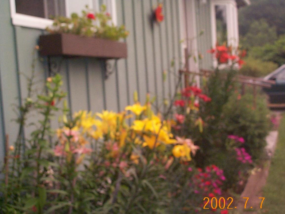 lillies2.jpg