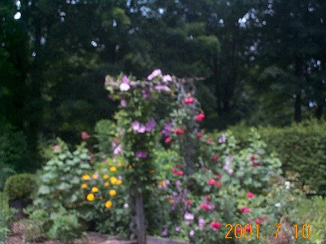 roseandclematis.jpg